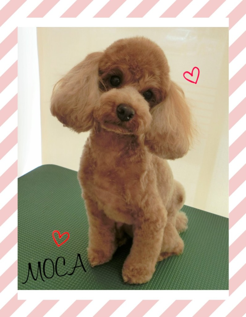 MOCAちゃん