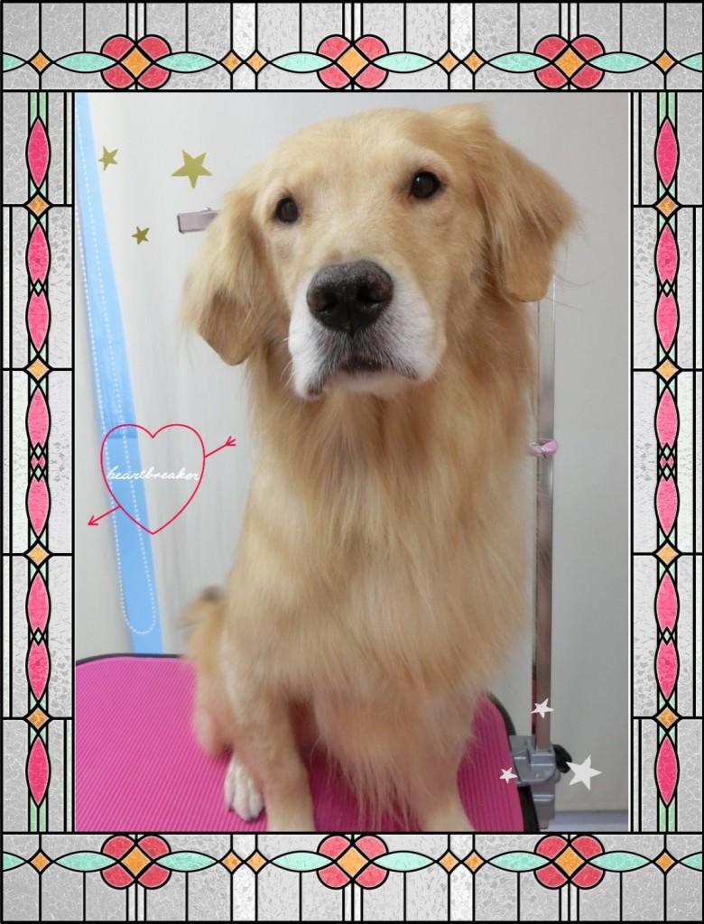 看板犬♡まるちゃん 今年はお世話になりました!! 来年もまた診察室にまたおじゃまします!!