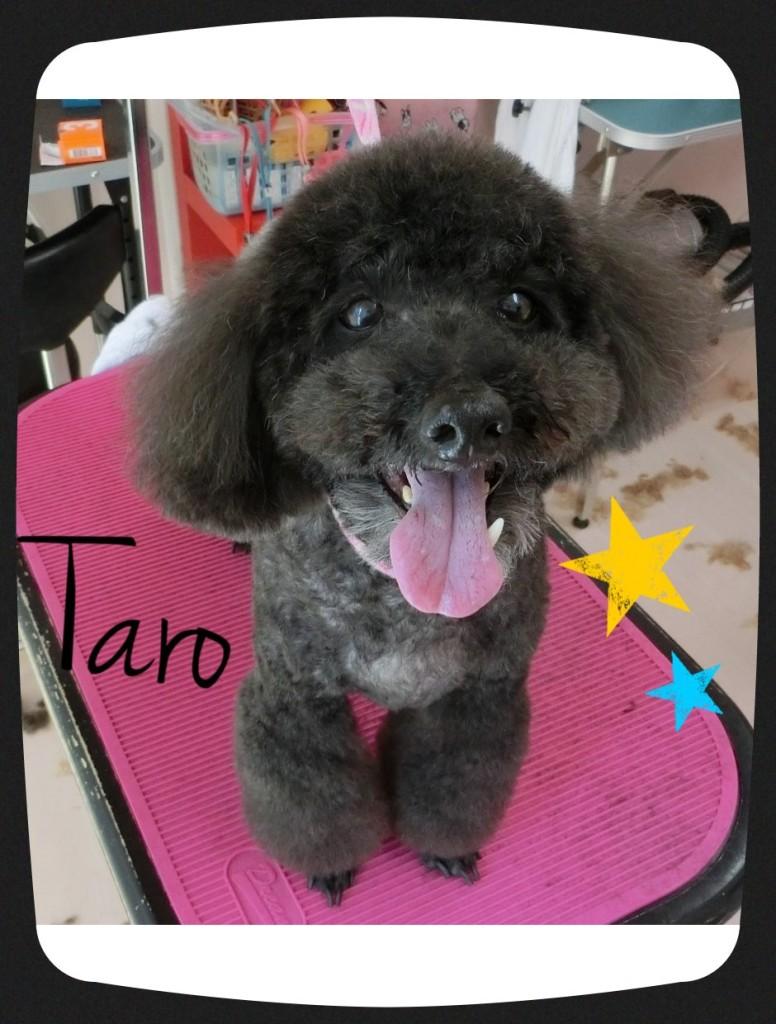 太郎ちゃん