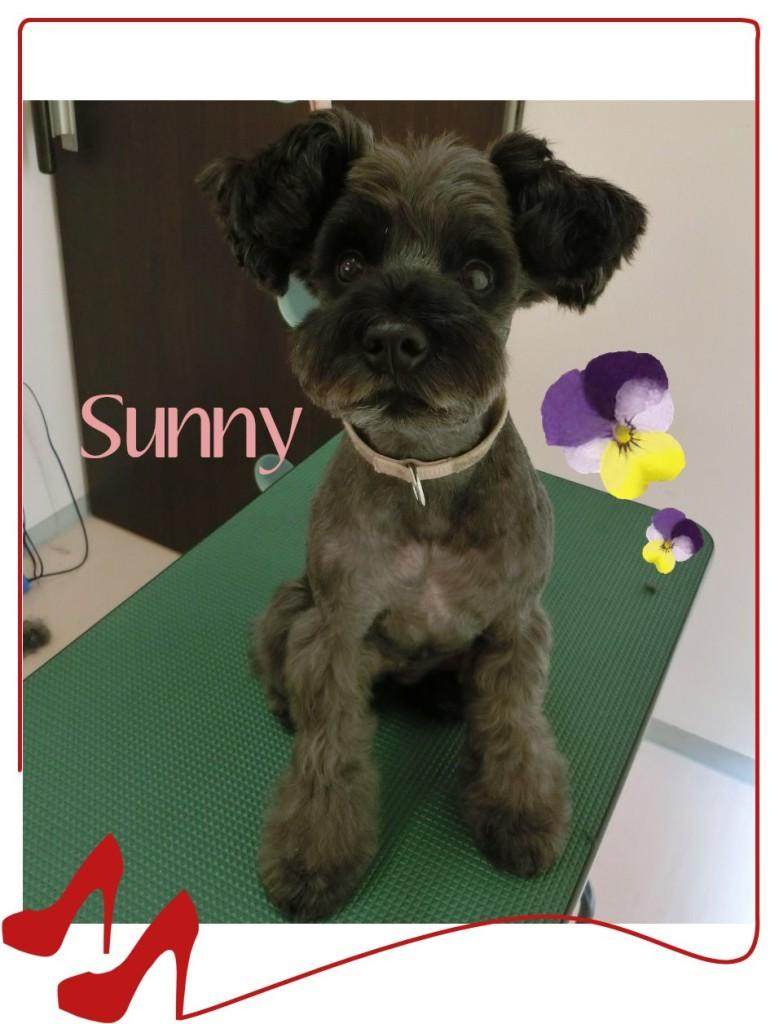 Sunnyちゃん